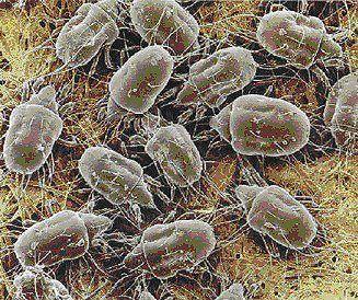 La primera encuenta paneuropea sobre la alergia a los ácaros del polvo doméstico evaluará su impacto sobre la calidad de vida