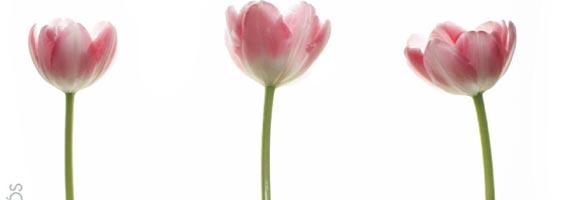 Imatge de la portada del llibre Mindfulness: El despertar a la vida