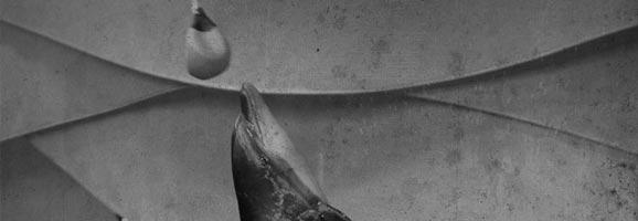 Fotografía de un delfín en cautividad, obligado a realizar espectáculos para los espectadores