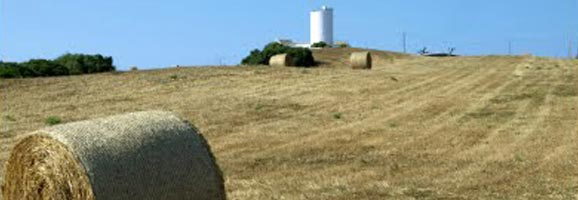 Camp de cultiu de farratge per a bestiar a Menorca.