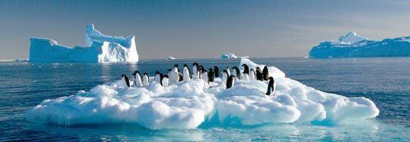 Pingüinos luchando por sobrevivir ante el cambio climático que amenaza su medio de vida y derrite los casquetes polares.