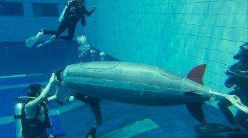 Submarins Originals Thalassa
