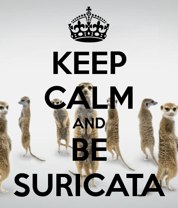 Keep calm and Be Suricata