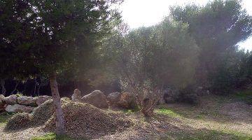 El pinar de Biniancolla ja no és un abocador