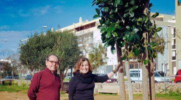 Maó planta cent arbres a espais urbans