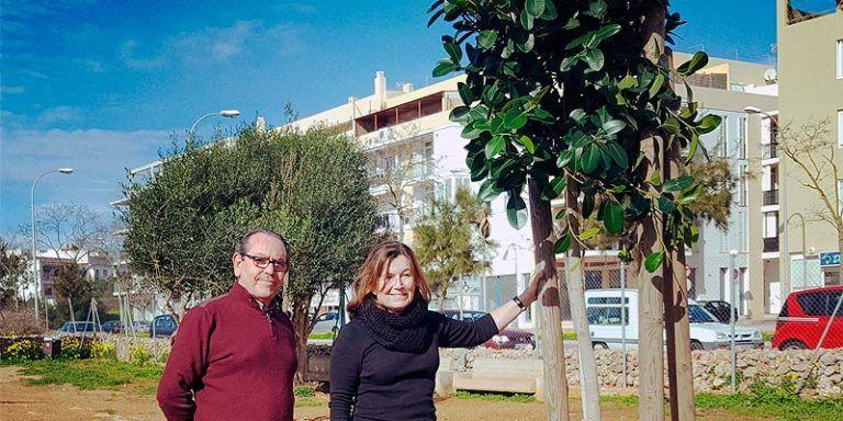 Plantado árboles Maó - Mahón