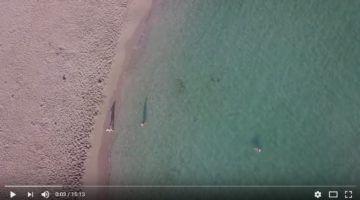 Difusió del Servei Insular de Neteja de Platges